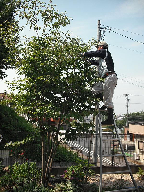 yamaguti_s01